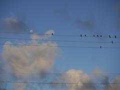 Birds watch moonset (Vanrensalier) Tags: panasonic gf1 lumix vario 45150mm f4