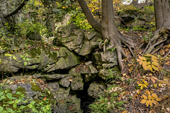 Living on the Rock (JeffStewartPhotos) Tags: walkingwithandrews rock rocks plants trees growingintherock livingintherock autumn fall brucetrail twissroad burlington ontario canada hiking walking photowalk photowalks takingphotoswithmyson hikingwithmyson beautifulafternoon greatday enjoyment familytime exploring outandabout thanksgiving jsp201910144 dscf1915 fuji fujifilm x100f