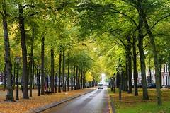 Het Voorhout in herfsttooi (Roel Wijnants) Tags: bomen laan langevoorhout kleuren jaargetijde herfst het voorhout herfsttooi roelwijnants wandelen roelwijnantsfotografie somerightsreserved ccbync hofstijl haagspraak denhaag thehague absoluteleythehague cityilove fotogebruik licentievoorwaarden