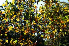 1PRO_4104 (Radu Pavel) Tags: radu radupavel pavel fotononstop cosmos ©radupavelallrightsreserved ©radupavelallerechtevorbehalten ©radupaveltodoslosderechosreservados ©radupavel版権所有 nature natur naturaleza 自然 colours farben colores 色 orange anaranjado 橙色 yellow gelb amarillo 黄 green grün verde 緑 autumn herbst otoño 秋 tree baum árbol 木 leaves blätter hojas 葉 outdoor alairelibre imfreien ルーマニア world welt mundo 世界 light licht luz 光 2019