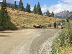 Shooting Moose Pictures (Jim Johnston (OKC)) Tags: shirley me moose animasforksroad willows evergreens atv sanjuanmountains colorado