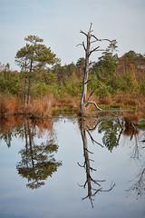 Pietzmoor (.rog3r1) Tags: pietzmoor moor niedersachen baum tree canon5ds 100400mm ef