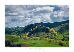 Triangulated Trees Mangaweka New Zealand (Dominic Scott Photography) Tags: dominicscott newzealand mangaweka ohingaiti manawatu manawatuwanganui trees spring gmaster sky clouds sony ilce7rm3 a7rm3 sel70200gm rangitikei