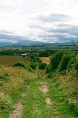 The Lane to Holburn Grange (cycle.nut66) Tags: olympus om2 fujifilm fuji superia 400 scan ag photolab northumberland northumbria summer 2019 cycle ride zuiko 5018 prime lens sunshine