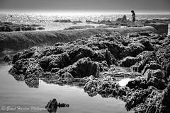 South Milton Devon (granth2903) Tags: devon uk beach rockpool reflections play seaside rocks seaweed sea seascape seashore blackwhite