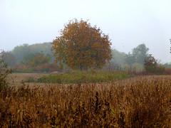 Autumn colors (Dumby) Tags: landscape ilfov românia autumn fall tree nature colors fog outdoor