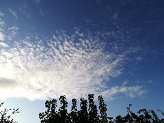 Great clouds today (daveandlyn1) Tags: clouds patterns spottyclouds folige bushes leaves smartphone psdigitalcamera cameraphone pralx1 p8lite2017 huaweip8