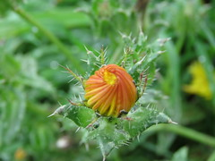 IMG_2331 (jesust793) Tags: flores flowers naturaleza nature