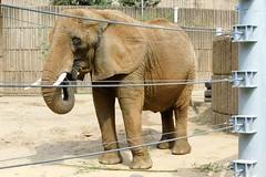 Buffalo Zoo (Tiger_Jack) Tags: zoo zoos zoosofnorthamerica itsazoooutthere animals animal buffalozoo elephant elephants