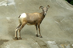 Memphis Zoo (Tiger_Jack) Tags: zoo zoos zoosofnorthamerica itsazoooutthere animals animal memphis memphiszoo