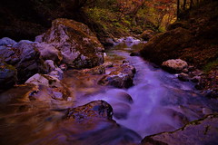 Water is an eternal traveler 4 (chikaraamano) Tags: water dreamy flow traveler lovely clear stones rocks mountain leaving season tree color valley lateautumn stream ravine forest outdoor naturallight freely landscape nature japan