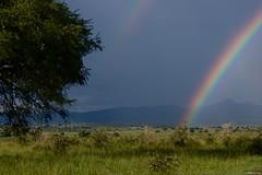 IMGP8731 Double Rainbow (Claudio e Lucia Images around the world) Tags: kideponp uganda kidepo np park nationalpark rain grass africa wildlife nature rainyday pentax pentaxcamera rainbow pentaxart clouds sigmalens sigmaart sigma pentaxk3ii sigma50500 bigma doublerainbow