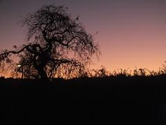 DSCF3437 (Benoit Vellieux) Tags: france lyon 2èmearrondissement 2nddistrict perrache arbre tree baum contrejour backlight gegenlicht