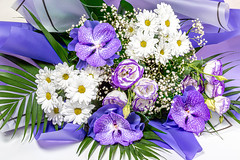 Beautiful bouquet of flowers with purple orchids and white chrysanthemums (wuestenigel) Tags: elegance flower fresh natural color blossom gift nature floral leaf day beauty purple background holiday bouquet orchid decoration plant valentine celebration beautiful bright chrysanthemum greeting violet birthday green bloom romantic wedding white blume natur flora blatt straus blumen hell summer sommer dekoration petal blütenblatt blooming blühen noperson keineperson romance romantik love liebe cluster garden garten arrangement anordnung farbe hochzeit geschenk 2019 2020 2021 2022 2023 2024 2025 2026 2027