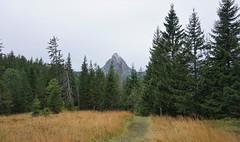 DSC02521 (Bergwandern Alpen) Tags: alpen alps bergwandern hiking grossmythen kantonschwyz trampelpfad wandermarkierung hochmoor langried nadelwald wanderweg herbst herbststimmung firs forest trail mountainforest