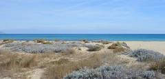 Into the wild (HervelineG) Tags: dune côte pampelonne plage beach var rx100 seashore mediterraneansea merméditerranée