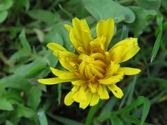 IMG_2395 (jesust793) Tags: flores flowers naturaleza nature