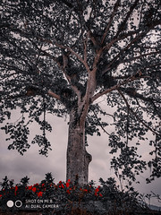 #smartphoto #smartphotography #natureza #smartphonephotography #nature #xiaomi #mi8 #xiaomimi8 #mobilegraphiabr  #ftamodora #clickdoiniciante  #brasilporfotos #fotografia #photography #topfotocelular #fotosmobiles #gcambrasil #fotoamadora #fotosamadoras : (Valmir E. Morbis) Tags: xiaomi smartphotography clickdoiniciante nature xiaomimi8 gcambrasil fotografia smartphoto mobilegraphiabr fotosmobiles fotoamadora fotosamadoras topfotocelular smartphonephotography brasilporfotos natureza ftamodora mi8 photography