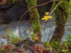 Herbst in der Wimbachklamm, Berchtesgaden (ludwigrudolf232) Tags: herbst wasser wimbach laub moos