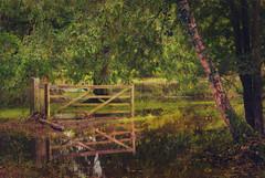 Flooded Reflection (seantindale) Tags: gate reflection autumn fall waterrefection shugborough nationaltrust ngc olympus omdem1markii