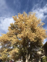October 16, 2019 - Fall colors in Thornton. (LE Worley)