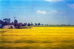 R a p e i n m o t i o n (Zew1920) Tags: rape motion rzepak train window plains trip landscape analog 2017 poland canon a1