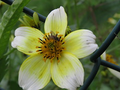 IMG_2275 (jesust793) Tags: flores flowers naturaleza nature