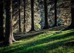 Woods (HonleyA) Tags: woodland fujifilm xpro2