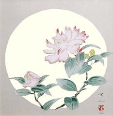 Sasanqua camellia (Japanese Flower and Bird Art) Tags: flower sasanqua camellia theaceae kojin kudo modern woodblock print japan japanese art readercollection
