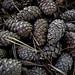 Pine Cones - Pommes de pin