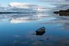River Tay at Newburgh