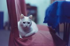 Nieve III (peichvasquez79) Tags: gato cat catphoto 35mm film filmisnotdead canon canonftql fujifilm fujieternavivid160t