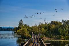 (Seattle Parks & Recreation) Tags: marshisland wetland lakewashington marshlands