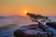 Wetterkiefer (annjane3) Tags: wetterkiefer lilienstein germany dresden tree mountain sunrise sunlight sun april annjane hdr stone sächsische schweiz saxony national park nature natur landschaft coth5 landscape ngc deutschland