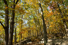 191015-FS-Allegheny-CJW-003 (usfs_Eastern_Region) Tags: outside national naturephoto leaf leaves colors colours tree trees flowers landscape yellow lake orange red autumn fall foliage pennsylvania allegheny forest rimrock trail