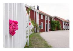 Small Swedish Old Town (simson60) Tags: schweden urlaub nikon dof bokeh bokehlicious altstadt