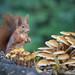 Mushrooms 🍄