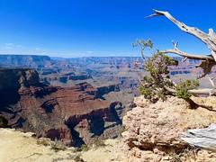 Grand Canyon-Just Gorges! :) (Meryl Raddatz) Tags: grandcanyon arizona usa canyon landscape