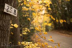 Haliburton Forest & Wild Life Reserve (pwilliamson222) Tags: fall autumn yellow leaves forest haliburton haliburtonforestandwildlifereserve