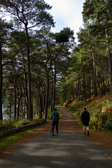 Glendalough (samdillon131) Tags: glendalough wicklow l forrest lake ireland trees nikon nikonphotography nikonphotos amateurphotography
