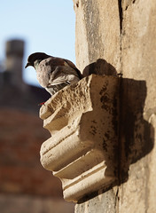 Dubrovnik (RS_1978) Tags: kroatien vögel wildtiere sony wirbeltiere sonyalpha7riii tiere batis28135 animals animaux aves birds craniota croatia ilce7rm3 schädeltiere vertebrata vertebrates wildlife dubrovnik gespanschaftdubrovnikneretva