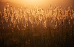 in the evening light (proffkom_) Tags: light evening rural countryside ukraine bukovina