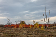 Autumn landscape. (Oleg.A) Tags: grass shadow landscape russia nature outdoor orange light countryside colorful leaves tree gold forest red morning sky skyscape autumn yellow cloudy field fall golden landscapes