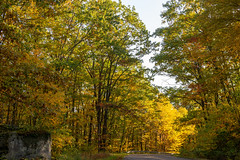 191015-FS-Allegheny-CJW-019 (usfs_Eastern_Region) Tags: outside national naturephoto leaf leaves colors colours tree trees flowers landscape yellow lake orange red autumn fall foliage pennsylvania allegheny forest jakes rocks scenic overlook road