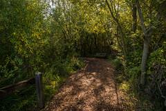 (Seattle Parks & Recreation) Tags: marshisland wetland lakewashington forestwalkway forestpath marshlands