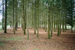 (Tamar Burduli) Tags: tamarburduli 35mm nature landscape film analog trees forest treeporn moss greenbark park poznan poznań poland travel parkcytadela citadelpark tataburduli