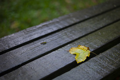 Only Just Begun (David Guidas) Tags: autumn leaf fall wet raoin weather wood nature seasons summicron 50mm leica m9 yellow lone