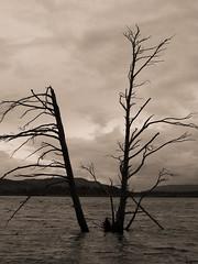 Scotland, 2019 (Olivier BERTRAND) Tags: scotland ecosse blackandwhite blackandwhitephotography canonlens canon5dmark2 digitalphotography dslr forest forêt landscape 50mm 50mmcanon paysage woods arbre trees outdoorphotography olivierbertrand monochrome highlands cairngorms nature naturallight outdoor primelens photography