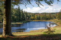 Craggside NT, lower lake by the stables (Sueyork58) Tags: nationaltrust nt northumberland craggside lake