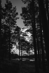 Craggside sunburst (Sueyork58) Tags: nationaltrust nt northumberland craggside